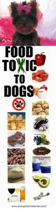 Foods Toxic To Dogs. #healthy #pet - 400 Dog Food And Dog Treat Recipes - RecipePin.com