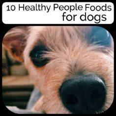 Here are 10 healthy people foods t - 400 Dog Food And Dog Treat Recipes - RecipePin.com