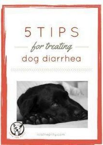 5 Tips for Treating Dog Diarrhea - - 400 Dog Food And Dog Treat Recipes - RecipePin.com