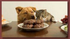 Don't forget the critters!!  Homem - 400 Dog Food And Dog Treat Recipes - RecipePin.com